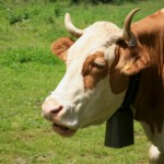 More Cowbell in SEO, Web Design, Internet Marketing, Social Media